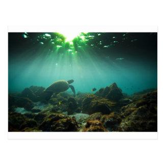 Tortuga de mar verde de la laguna del océano subac tarjetas postales
