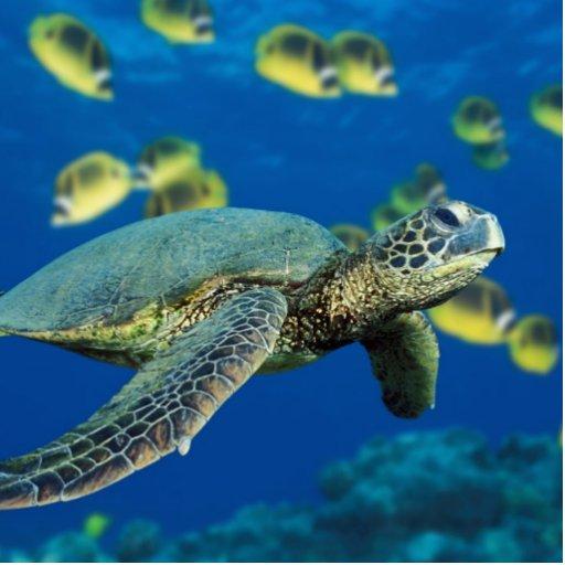 Tortuga de mar verde fotoescultura vertical