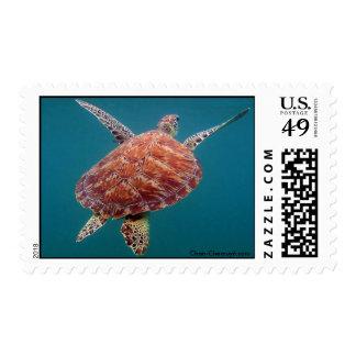 Tortuga de mar verde gigante sello