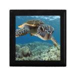 Tortuga de mar verde hawaiana caja de joyas
