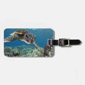 Tortuga de mar verde hawaiana etiquetas para maletas