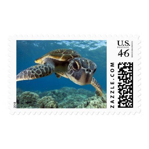 Tortuga de mar verde hawaiana envio