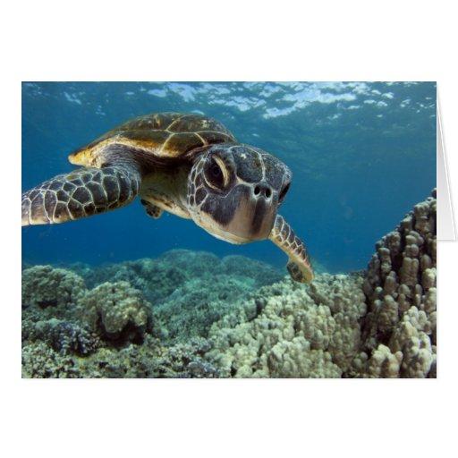 Tortuga de mar verde hawaiana felicitación