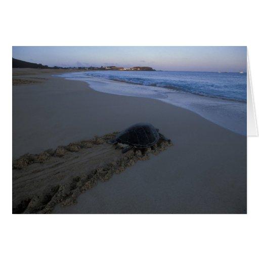 Tortuga de mar verde, (hembra de los mydas del Che Tarjeta De Felicitación