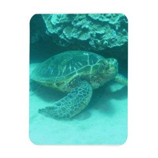 Tortuga de mar verde imán