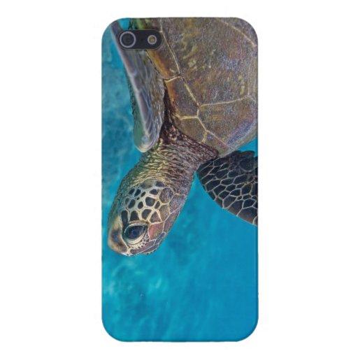 Tortuga de mar verde iPhone 5 funda