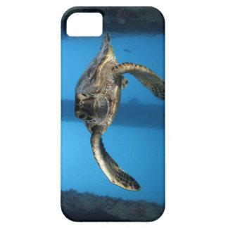 Tortuga de mar verde juvenil iPhone 5 fundas