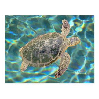 Tortuga de mar verde juvenil postales