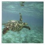 Tortuga de mar verde, (mydas del Chelonia), costa  Teja Cerámica