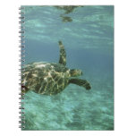 Tortuga de mar verde, (mydas del Chelonia), costa  Cuaderno