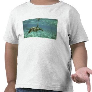 Tortuga de mar verde mydas del Chelonia costa Camiseta