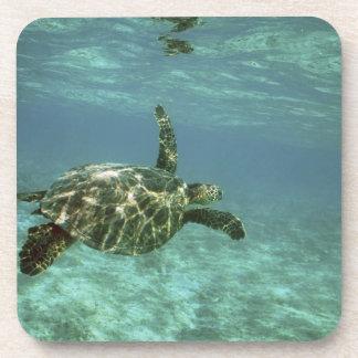 Tortuga de mar verde, (mydas del Chelonia), costa  Posavasos