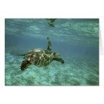 Tortuga de mar verde, (mydas del Chelonia), costa  Felicitacion