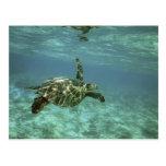 Tortuga de mar verde, (mydas del Chelonia), costa  Postal