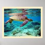 Tortuga de mar verde (mydas del Chelonia) Impresiones