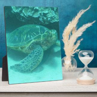 Tortuga de mar verde placa