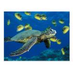 Tortuga de mar verde postales