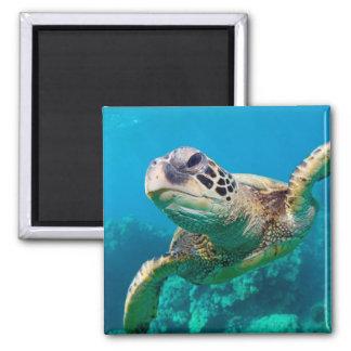 Tortuga de mar verde que nada sobre el arrecife de imán cuadrado