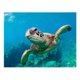 Tortuga de mar verde que nada sobre el arrecife de postal