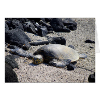 Tortuga de mar verde que se asolea, Hawaii, tarjet Felicitaciones