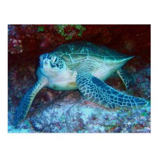 Tortuga de mar verde subacuática tarjeta postal