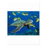 Tortuga de mar verde tarjeta postal