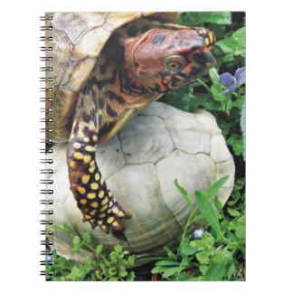 Tortuga de protección Shell de la tortuga Libretas Espirales
