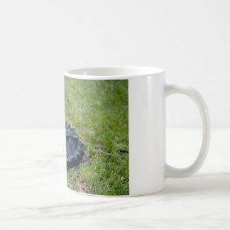 Tortuga de rotura de cocodrilo taza
