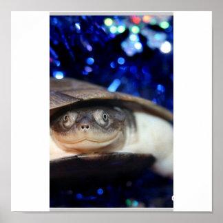 Tortuga de Sideneck del africano que mira la cámar Impresiones