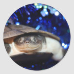 Tortuga de Sideneck que mira el espectador en la Etiqueta Redonda