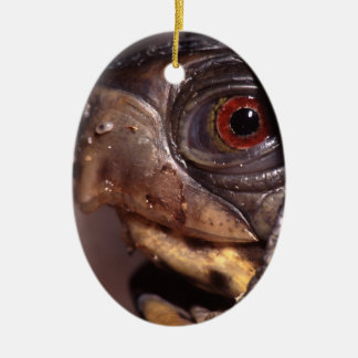 tortuga ornato