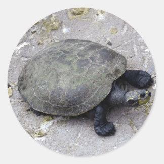 tortuga del agua en el banco etiquetas redondas