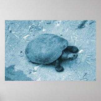 tortuga del agua en reptil azul del tinte del banc póster