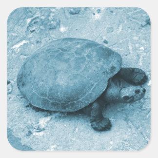 tortuga del agua en reptil azul del tinte del pegatinas cuadradases