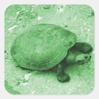 tortuga del agua en reptil del verde del banco calcomanias cuadradas