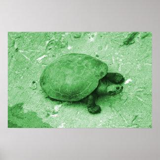 tortuga del agua en reptil del verde del banco póster