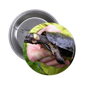 Tortuga del pantano con el radiotransmisor puesto pin