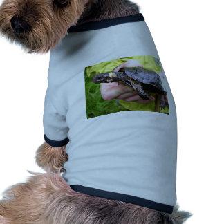 Tortuga del pantano con el radiotransmisor puesto camisetas mascota
