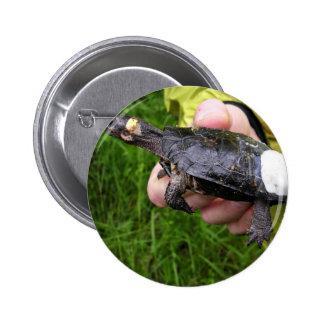 Tortuga del pantano puesta con el radiotransmisor pin