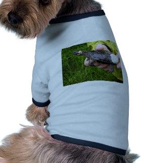 Tortuga del pantano puesta con el radiotransmisor prenda mascota