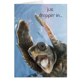 tortuga del wheeeeeeeee, apenas droppin en… tarjeta de felicitación