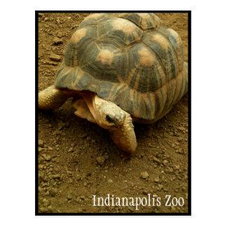 Tortuga en el parque zoológico de Indianapolis Postal