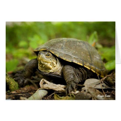 Tortuga en piso del bosque tarjetón