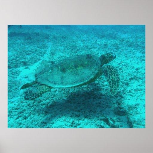 tortuga en poster del mar A PARTIR del 14,95
