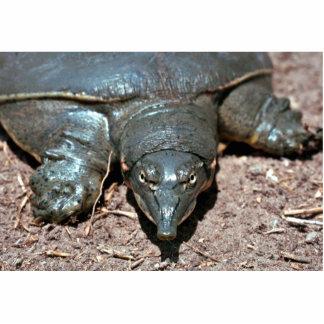 Tortuga espinosa del softshell de Tejas Fotoescultura Vertical