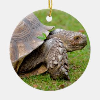 Tortuga estimulada africana en hierba adorno navideño redondo de cerámica