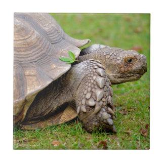 Tortuga estimulada africana en hierba azulejo cuadrado pequeño