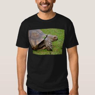Tortuga estimulada africana en hierba camisas
