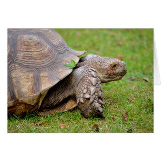 Tortuga estimulada africana en hierba tarjeta de felicitación