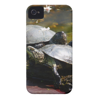 Tortuga iPhone 4 Protectores